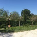 Emplacement de camping en Provence à Chateaurenard